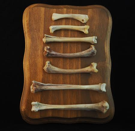"""Bones from young chicken and European starling. All bones are beetled. 7"""" x 5"""" x 3/4"""" Thick pine panel plaque. Hand stained in Colonial Pine and varnished in semi"""