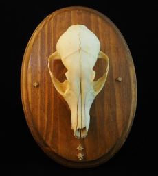 Fox Skull and Serpent Bones