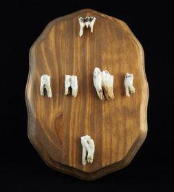 Goat Teeth