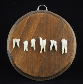 "Six goat teeth come from Crete Greece. They have been ethically found and cleaned without chemical process. Approximately 5"" x 3.5"" x 1/4"" thick pine panel plaque. Hand stained in American walnut and varnished in semi gloss."