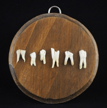"""Six goat teeth come from Crete Greece. They have been ethically found and cleaned without chemical process. Approximately 5"""" x 3.5"""" x 1/4"""" thick pine panel plaque. Hand stained in American walnut and varnished in semi gloss."""
