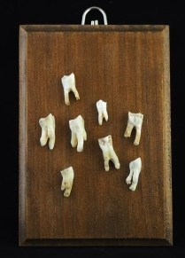 """Eight goat teeth from Crete Greece. They have been ethically found in canyons, pastures and cleaned without chemical process. Approximately 5"""" x 3.5"""" x 1/4"""" thick pine panel plaque. Hand stained in American walnut and varnished in semi gloss"""