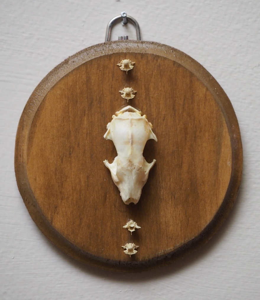 Hedgehog Skull and Distressed Serpent Vertebrae